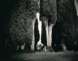 Cyprès d'Italie (Cupressus sempervirens 'Stricta), 1995 © Sally Mann